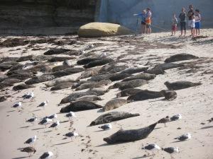 The La Jolla seals