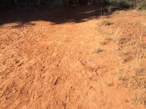 Look, Kids!  It's dirt!
