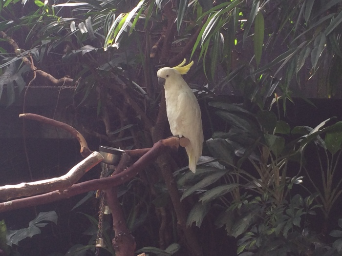 There were lots of tropical birds at the small conservatory.  The larger ones had their wings clipped so they wouldn't peck people.  That made me sad, but they were fun to watch.