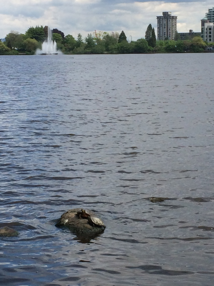 Turtles in Lost Lagoon