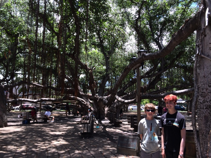 We then drove to the town of Lahaina and spent a good portion of the afternoon in the shade of this banyan tree.  It's a type of strangler fig and has 16 major trunks.  So everything you see here is the same tree.
