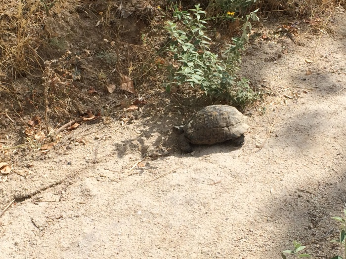 We saw several small tortoises on our hikes.