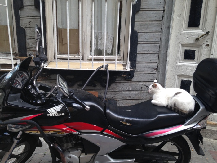 """Laurel took this one, too.  She said, """"That is one bad-ass cat."""""""